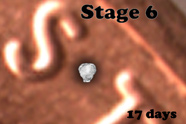 Stage 6
